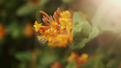 Orange Flower Stock Footage