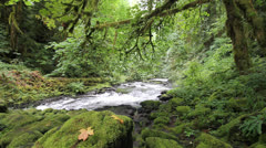 Cedar Creek in Woodland Washington is a Stream Home to the Historic Grist Mill Stock Footage