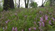 Stock Video Footage of POV of Walking on Path in Forest, Footsteps View, People Stepping in Flowers