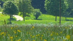 SM European Cyclist Biker cycling in countryside tree lane Stock Footage