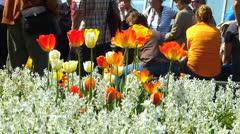 Erlangen Botanic garden Spring Tulip blossom n visitor Stock Footage