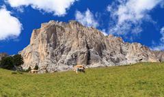 Pasture beneath sassolungo mount Stock Photos