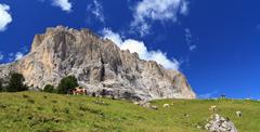 cows beneath sassolungo mount - stock photo
