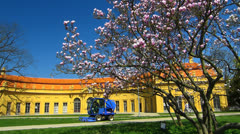 Erlangen Hofgarten spring Magnolia flower blossom Stock Footage