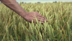 Hand running through wheat field Stock Footage