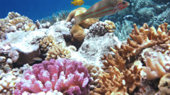 Coral and fish - stock footage