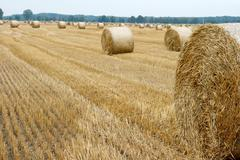 haybails - stock photo