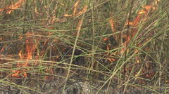 P02893 Grassland Fire in Africa Savanna - stock footage