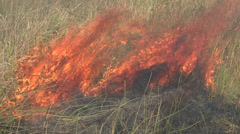 P02894 Hot Grassland Fire and Flames - stock footage