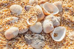 Stock Photo of shell molluscs on the beach