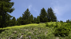 Summer mountain route Stock Footage