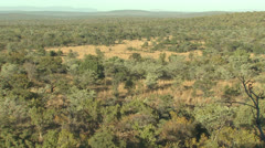 P02883 African Bush in the Morning Stock Footage