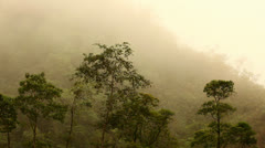 Fog Rolling Over the Tree Tops In Costa Rica HD Video Stock Footage