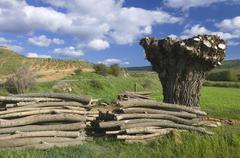 felled tree - stock photo