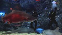 Sharks feeding. Stock Footage