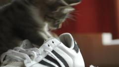 Playful cat in sport shoe Stock Footage