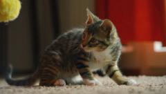 Smart cat Stock Footage