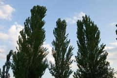 Many tree Stock Photos