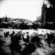 Blurred image of birds in a city square Stock Photos