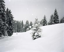 Lumi metsien raivaamiseen Kuvituskuvat