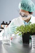 Lab teknikko tarkastaa taimi petrimalajlle laboratoriossa Kuvituskuvat