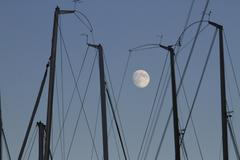 The masts of sailboats, dawn, moon in background Stock Photos