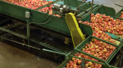 Peaches moving along conveyor in packing plant Stock Footage