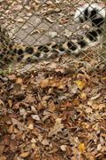 Autumnal similarities of cat tail and leaves Stock Photos