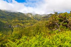green nature of madeira - stock photo