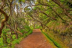 in the forest, madeira - stock photo