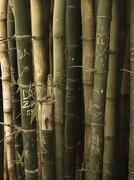 Bunch of bamboo with engraved imand declarations of love Stock Photos