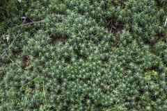Detail of shrubs Stock Photos