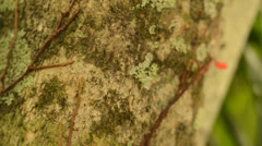Ants Crawling On a Tree In Costa Rica HD Video Stock Footage