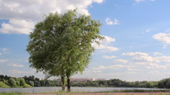 Tree against the sky - stock footage