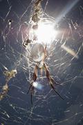 Sun shining on a spider hanging from a web - stock photo