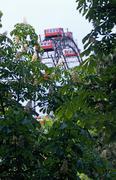 Austria, Vienna, Prater park amusement park big wheel seen behind trees Stock Photos