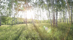 Soaring through a forest at sunset Stock Footage