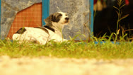 Stock Video Footage of Dog Sitting Outside in The Sun HD Video