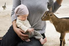 A goat pulling on the drawstring of a baby's pants Stock Photos