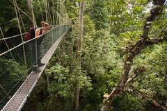 A woman looking down from a tree canopy walkway, Teman Negara National Park, Stock Photos