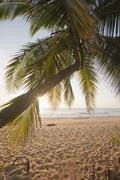 View through palm leaves of a beach Stock Photos