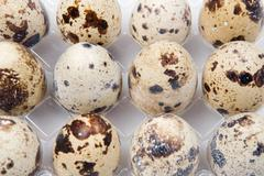 picture of many small quail eggs - stock photo