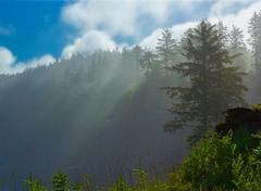fog in the morning in patrickspoint state park, california. - stock photo