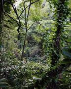 Lush foliin rainforest in Maui, Hawaii Stock Photos