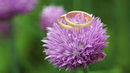 Stock Video Footage of wedding rings on purple flower