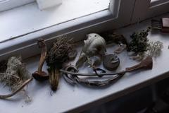 Stock Photo of Various dried plants and artifacts on a window sill