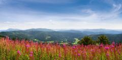 Wildflowers in the Black Forest, Germany Stock Photos