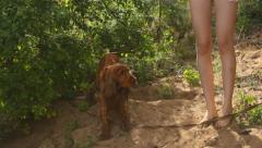 Dog on the beach next to beautiful female legs, English Cocker Spaniel Stock Footage