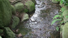 CHINESE GARDEN STREAM EDGED BY BOULDERS AND FERN Stock Footage
