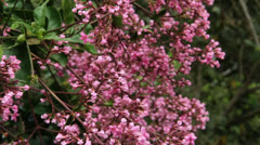 Pink flowers Colombia rain forest butterfly Stock Footage